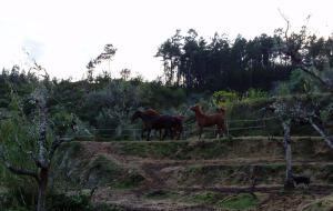Horses at Quinta das Abelhas